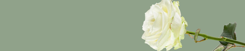 Avalanche Rosen bestellen
