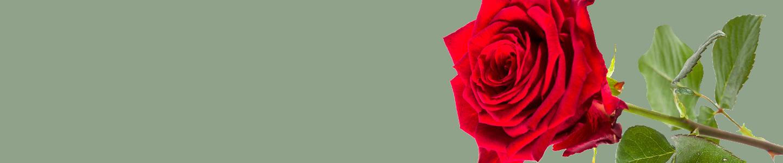Red Naomi Rosen bestellen