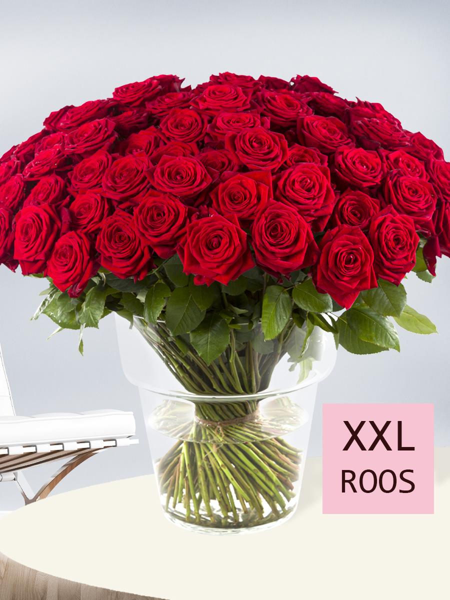 100 rote Rosen bestellen