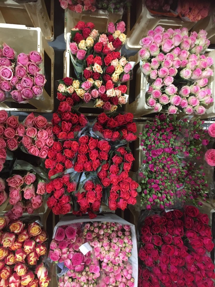 Frische Rosen