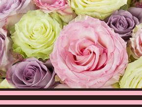Fakten über Rosen