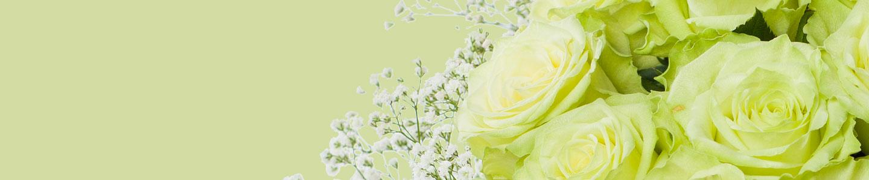 Grüne Rosen