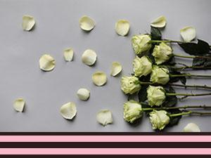 Rosen Weiß