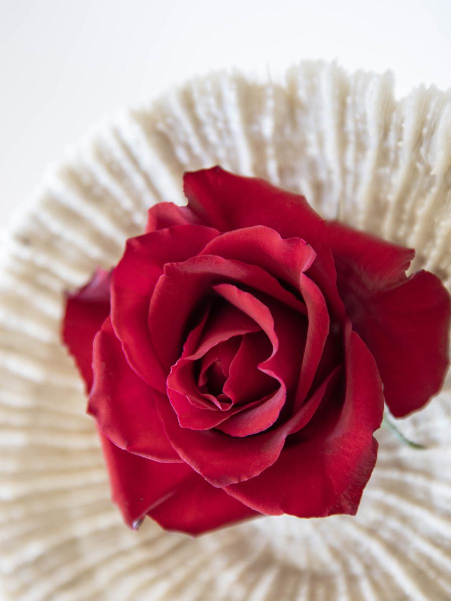 Rosen als perfektes Geschenk