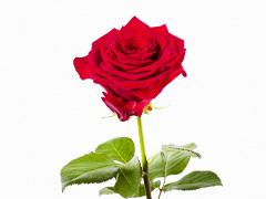 Rosen nach Anzahl bestellen