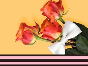Geschäftliche Rosen für Anlässe bestellen