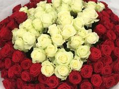 Stückzahl Rot-Weiße Rosen