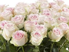 100 Rosen bestellen