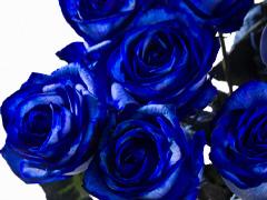 Blauer Rosenstrauß: Anzahl bestellen