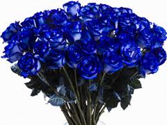 Blaue Rosen versenden