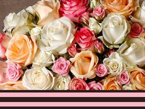 Bedeutung von Rosenfarben