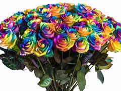 Rosen in allen Farben bestellen