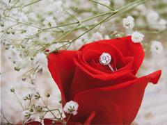 Dekoriere mit Rosen