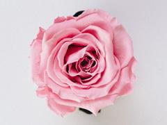 Rosen pro Stück verteilen