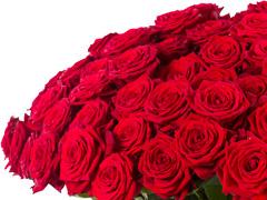 Rote Rosen pro Stück bestellen