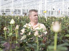 Züchter: Berg Roses
