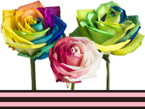 Rosen für dein Unternehmen