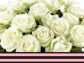 Große Anzahl Rosen bestellen