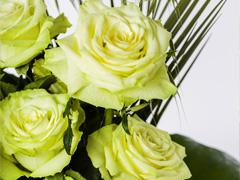 Grüne Rosen bestellen