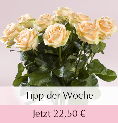 Lachsfarbene Rosen bestellen