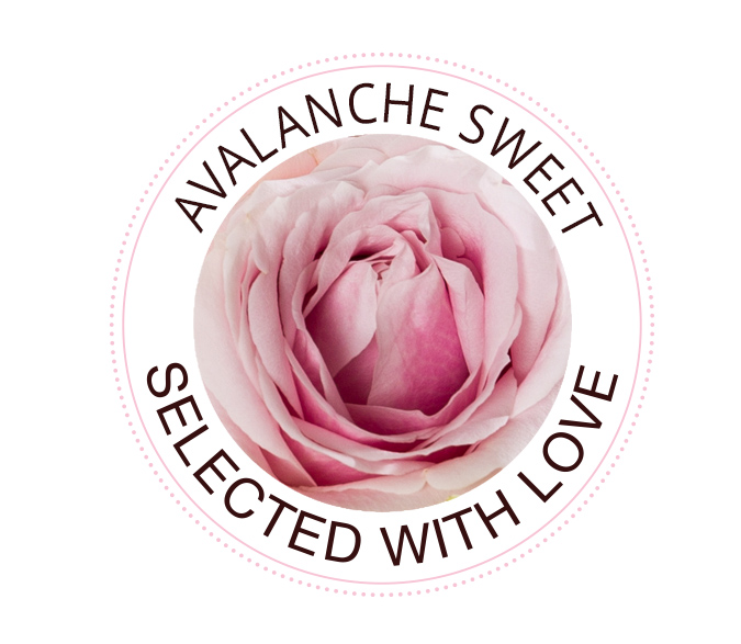 Avalanche Sweet Rosen