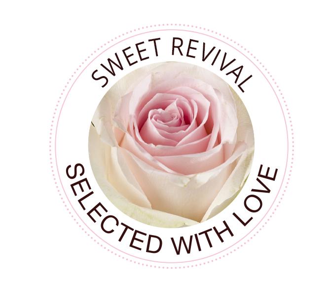 Sweet Revival Rosen