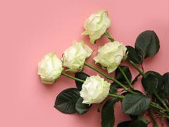 Online große Rosen bestellen