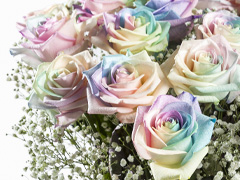 Regenbogen Rosen versenden