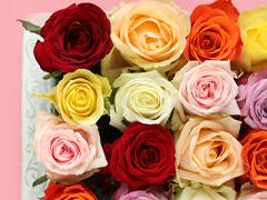 Rosen Farben