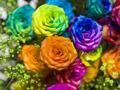 Regenbogen Rosen kaufen