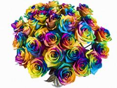 Regenbogen Rosen bestellen