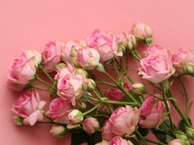 Rosa Rosen verschenken