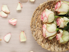 Rosen aus Ecuador