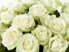 Anzahl Weiße Rosen bestimmen