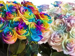 Regenbogen Rosenlieferung