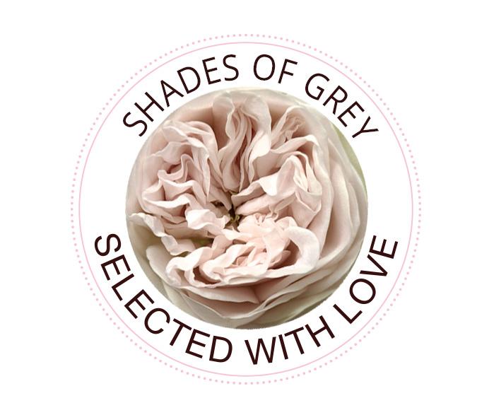 Shades of Grey Rosen