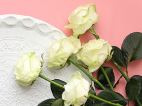 Weiße Rosen Versand